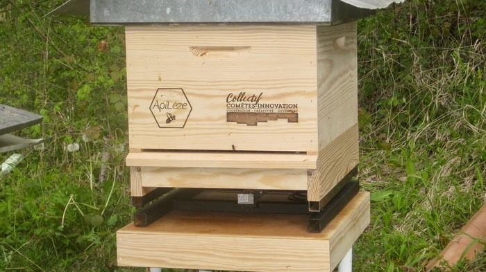ruche connectée lézat sur leze